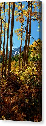 Autumn Brilliance 2 Canvas Print