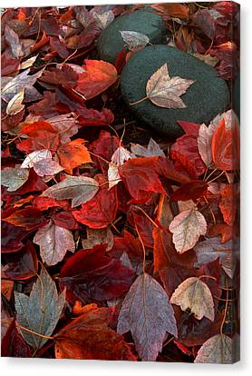 Autumn Broadcast Canvas Print by Gwyn Newcombe
