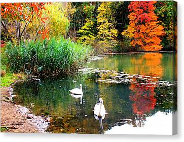 Autumn By The Swan Lake Canvas Print by Dora Sofia Caputo Photographic Art and Design