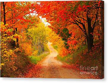 Canvas Print featuring the photograph Autumn Cameo Road by Terri Gostola