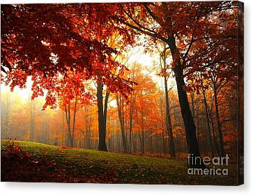 Canvas Print featuring the photograph Autumn Canopy by Terri Gostola