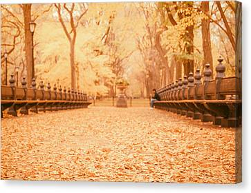Autumn - Central Park Elm Trees - New York City Canvas Print by Vivienne Gucwa