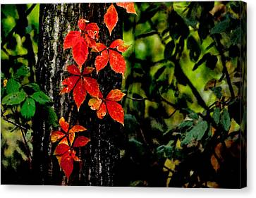 Autumn Climber Canvas Print