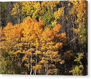 Autumn Color At The Continental Divide Canvas Print