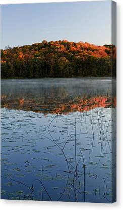 Reflections Of Nature Canvas Print - Autumn Color Forest Reflected In Grass by Panoramic Images