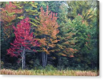 Autumn Color Painterly Effect Canvas Print by Carol Leigh