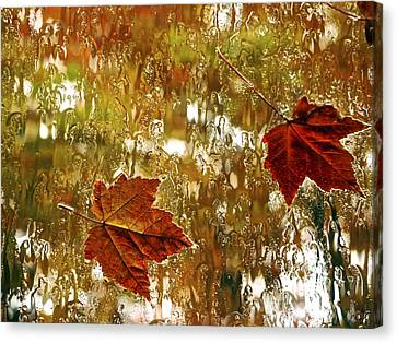Autumn Colored Window Leaves Canvas Print
