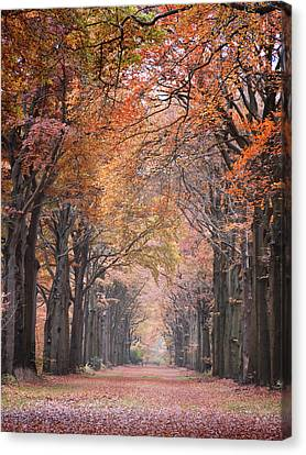Autumn - Colorful Red Green Orange Nature Landscape Fine Art Photography Canvas Print by Artecco Fine Art Photography