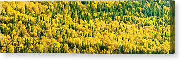 Autumn Colors At Appalachian Mountains Canvas Print by Panoramic Images