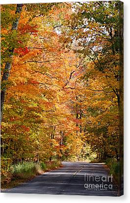 Canvas Print featuring the photograph Autumn Colors - Colorful Fall Leaves Wisconsin IIi by David Perry Lawrence