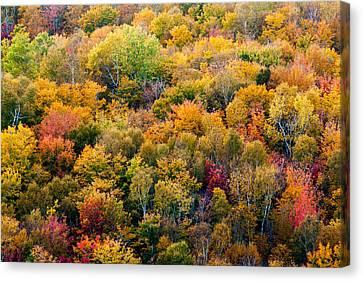 Autumn Colors Canvas Print by Matt Dobson