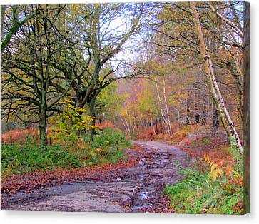 Autumn Colours  Canvas Print by Joyce Woodhouse