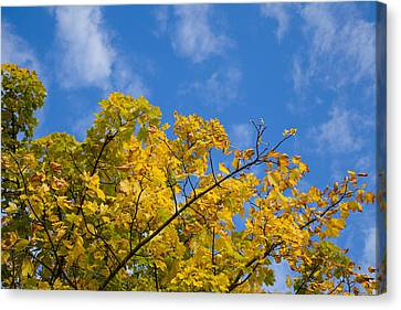Autumn Colours On An October Morning . Canvas Print by Paul Lilley