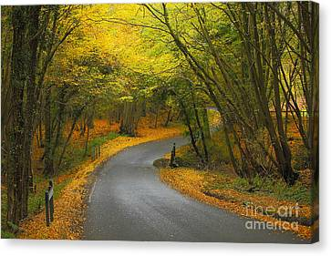 Autumn Colours Canvas Print by Stephen Dowdell