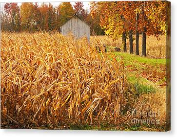 Canvas Print featuring the photograph Autumn Corn by Mary Carol Story