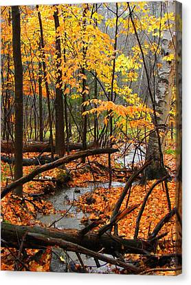 Canvas Print featuring the photograph Autumn Creek In The Rain by Rodney Lee Williams