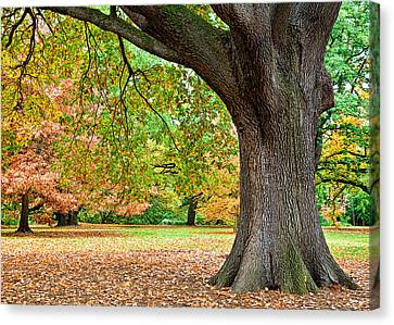 Autumn Canvas Print by Dave Bowman