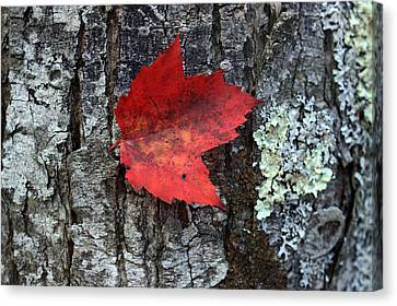 Autumn Day Canvas Print by Mark Ashkenazi