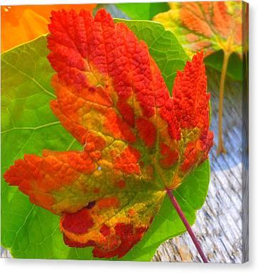 Canvas Print featuring the photograph Autumn Delight by Karen Horn