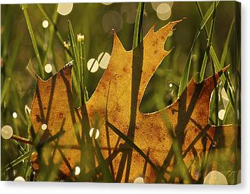 Autumn Dew Canvas Print by Penny Meyers