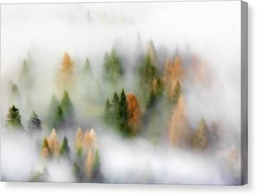 Autumn Dream Canvas Print by Kristjan Rems