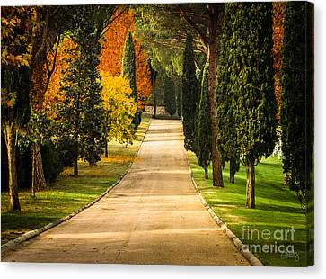Autumn Drive Canvas Print by Prints of Italy