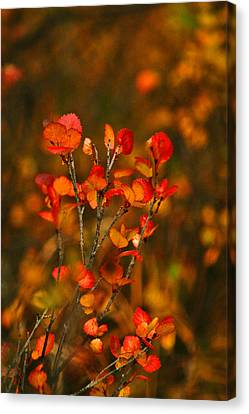 Autumn Emblem Canvas Print