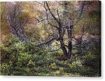 Autumn Enchantment Canvas Print by Debra and Dave Vanderlaan