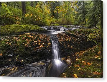Autumn Euphoria  Canvas Print by Mark Kiver