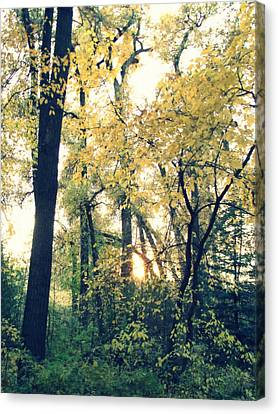 Autumn Evening Canvas Print by Jessica Myscofski