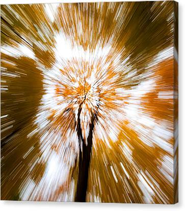 Autumn Explosion Canvas Print by Dave Bowman