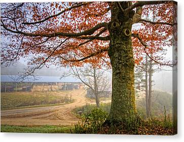Autumn Farm Lane Canvas Print by Debra and Dave Vanderlaan