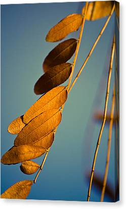 Canvas Print featuring the photograph Autumn Feathers by Dave Garner