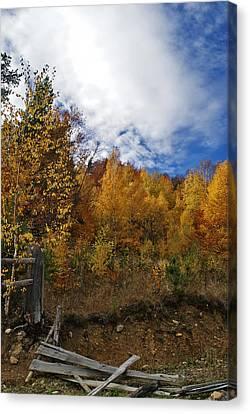 Autumn Fence Canvas Print by Bogdan M Nicolae