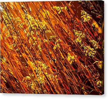 Autumn Field Canvas Print by Brian Stevens