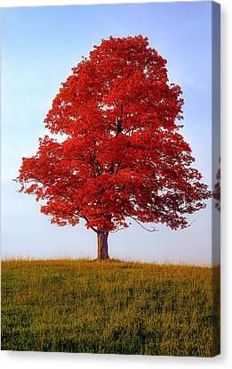 Autumn Flame Canvas Print by Steve Harrington