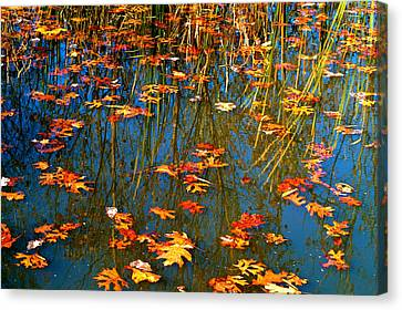 Canvas Print featuring the photograph Autumn  Floating by Peggy Franz