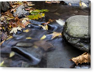 Autumn Leaf On Water Canvas Print - Autumn Flow by Andrew Pacheco