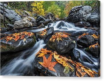 Oak Creek Canvas Print - Autumn Flow by Guy Schmickle