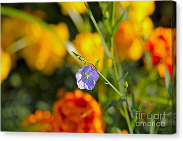 Canvas Print featuring the photograph Autumn Flower by Jay Nodianos