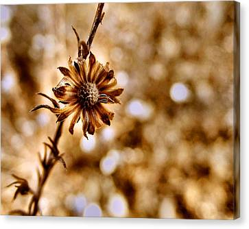 Autumn Flower Canvas Print