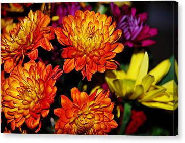 Autumn Flowers Canvas Print by Linda Segerson