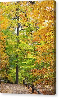 Autumn Foliage Canvas Print by Nishanth Gopinathan