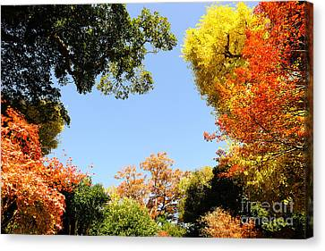 Autumn Forest Colors Canvas Print by Boon Mee