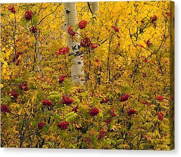 Autumn Forest Colors Canvas Print by Leland D Howard