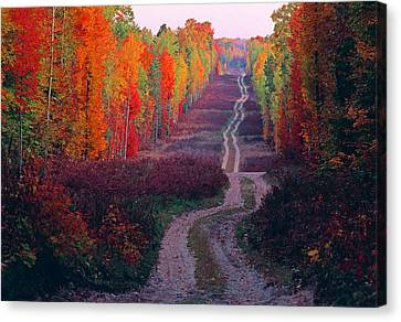 Autumn Forest Road Canvas Print