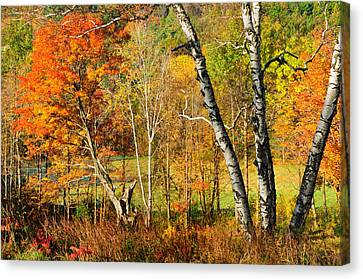 Autumn Forest Scene - Litchfield Hills Canvas Print by Expressive Landscapes Fine Art Photography by Thom
