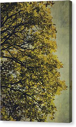 Canvas Print featuring the photograph Autumn Glory by Ari Salmela