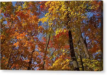 Autumn Glory Canvas Print by Larry Bohlin
