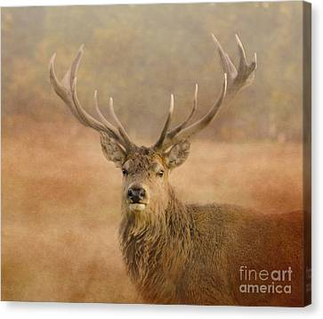 Magnificant Stag Canvas Print